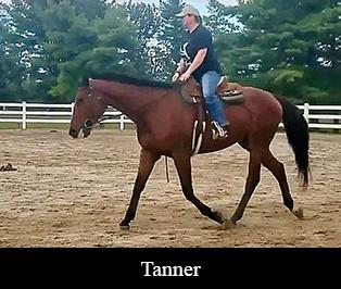SALE HORSES | Townsend's Training Farm Inc  | 536 4th Range Rd