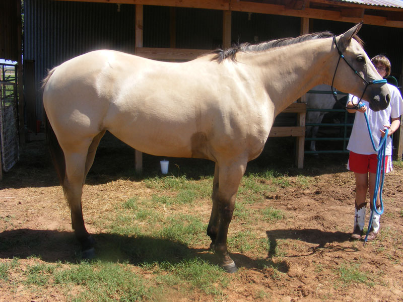 Female horse ass - photo#27